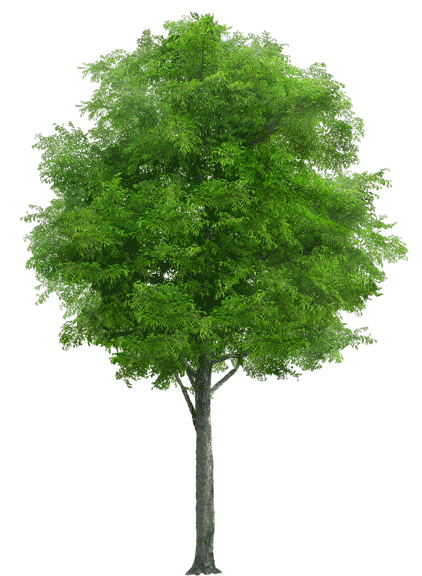 Öko-Luftballon Natur Verpackung Baum